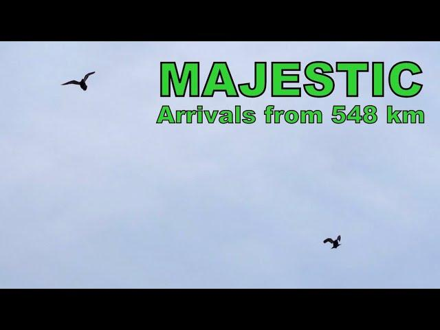 Vlog #104 MAJESTIC Arrivals From 548km #HansAndEvertJanEijerkamp
