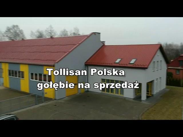 Johannes Jakobs - Tollisan - GOŁĘBIE NA SPRZEDAŻ !