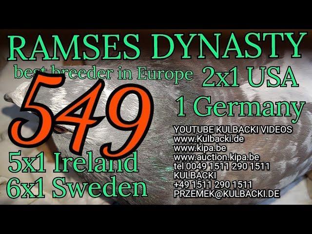 RESERVIERT FÜR ROSTOCK DEUTSCHLAND, 549 Ramses x córka 41 x matka:Ramses x1/2siostra 109, 6x1.Sweden
