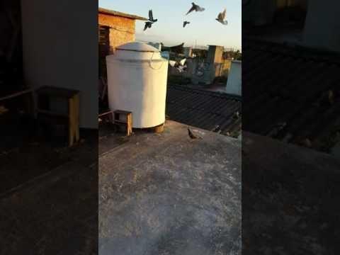 Palomiando en camaguey cuba. Toto and Oscarito loft