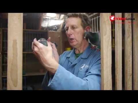 Benny Steveninck - Gwiazdy Sportu Gołębiarskiego
