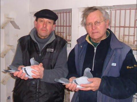 Video 94: Schoors & De Waele of Belgium: Premier Pigeon Racers