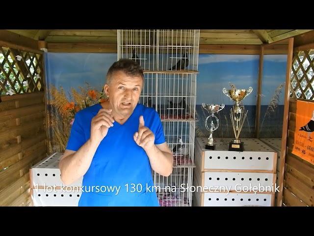 Typowanie na 1lot konk. gołębi młodych na Słoneczny Gołębnik 25 06 2020