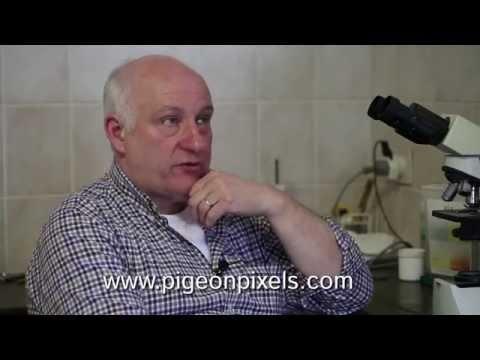 Trailer PigeonPixels 2: Nico Pronk & Ben de Keijzer.