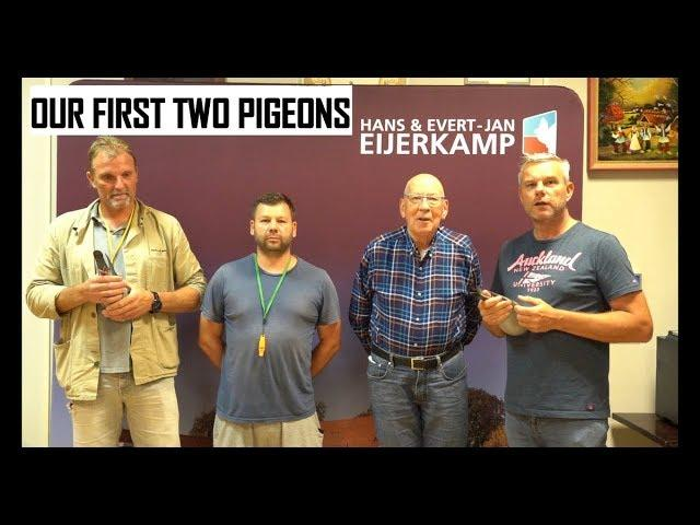 Vlog #70 TWO PIGEONS of Two Races Presented