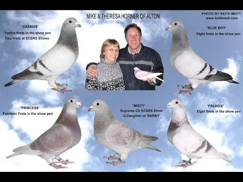 Video 335: Mike & Theresa Horner of Alton: Show Pigeons