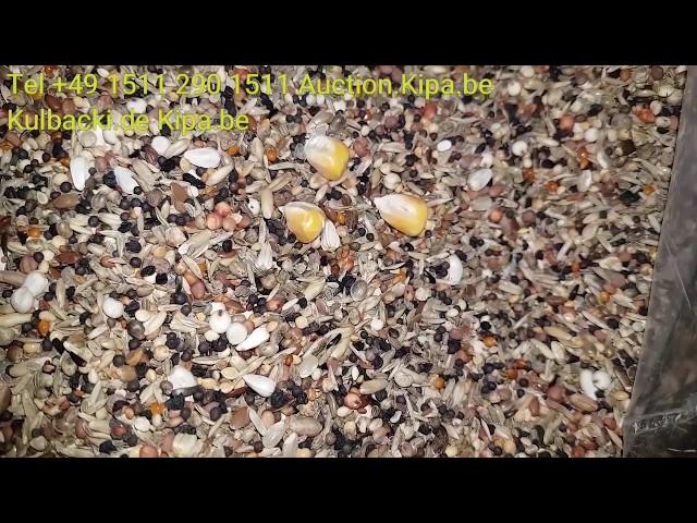 Samenmischung extraklasse KARMA DLA GOLEBI PIGEONS FOOD video about food f.Pigeons informations top
