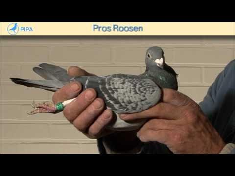 PIPA - Pros Roosen Auction - June