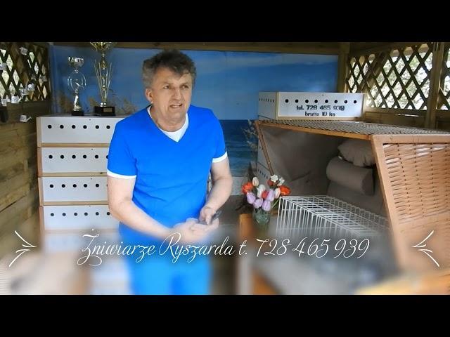 Żniwiarze gołębie przestworzy tel  728 465 939