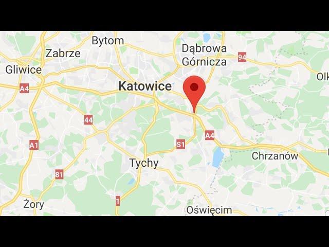 PZHGP ODDZIAŁ MYSŁOWICE ORYGINAŁY RASY KULBACKI DV-039, 6/6 KONKURSÓW 100% KON. 6 basked 6 winners!!