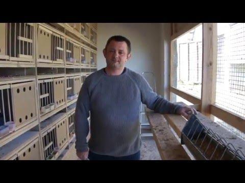 Mariusz Dmitruk - nowe gołębniki, gołębie, itp. - część 03 - 15.04.2016r